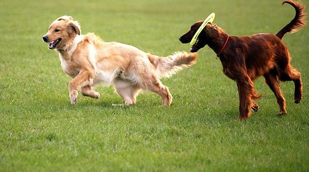 102107675-dog-park-bullies-632x475-632x353